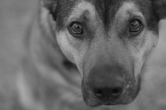 Hvad koster en hund?