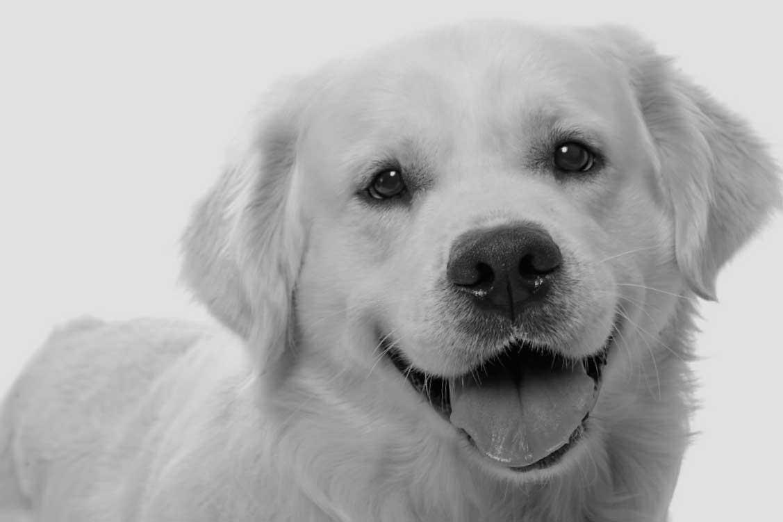 Hvad koster en hundeforsikring? - HvadKosterDet.dk