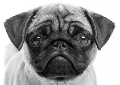 Hvad koster en hundeforsikring?