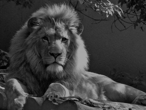 Hvad koster Zoo årskort og billetter?